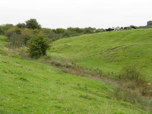 Cattle Grazing Near Birkin Brook
