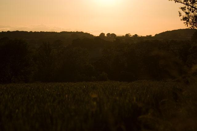 Sunset over Bickenhall Wood