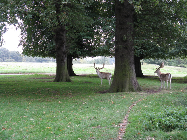 Deer At Tatton Old Hall