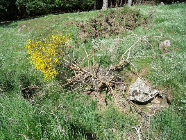 The last surviving twig