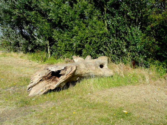 Log by a footpath