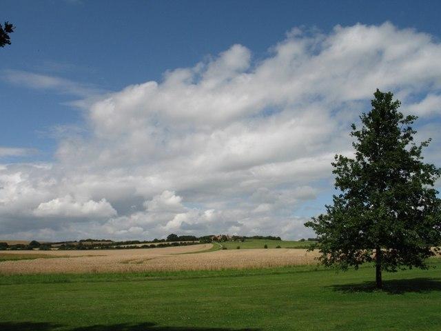 Wheatfield at Eythrope, looking towards Beachendon Farm