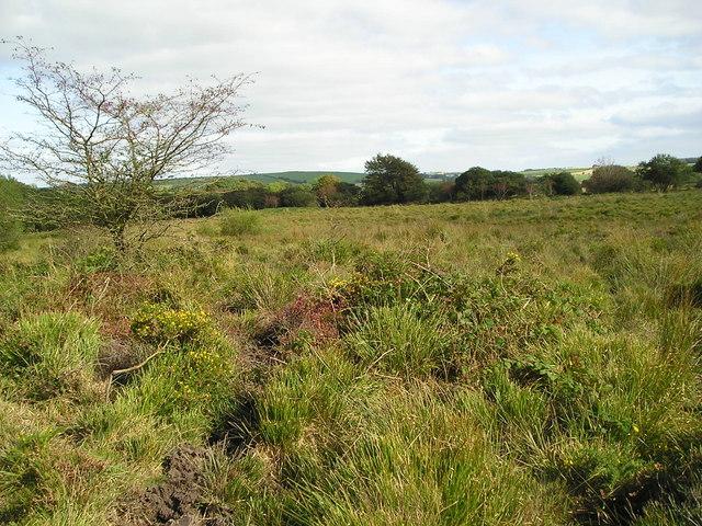 Llawr-Cwrt Nature Reserve