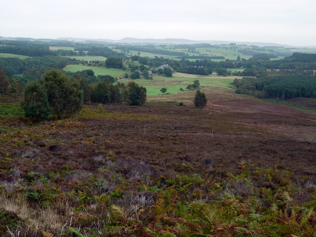Moorland above Harbottle