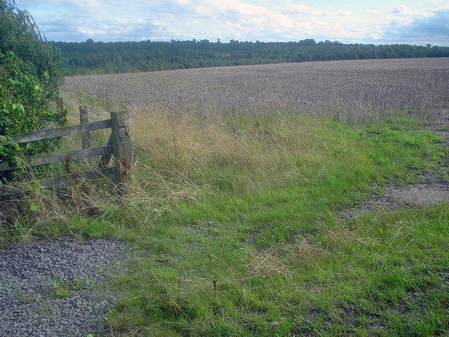 Wheat field near the Sence Forest Park