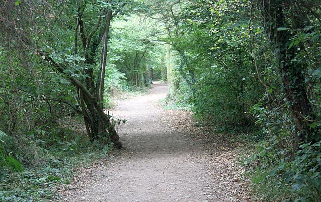 Path in Nunnery Wood