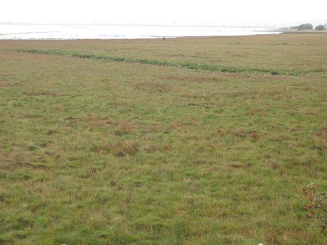Salt marsh, Higgins' Neuk