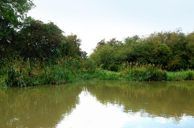 Grand Union Canal verdant bank at Bsacote locks