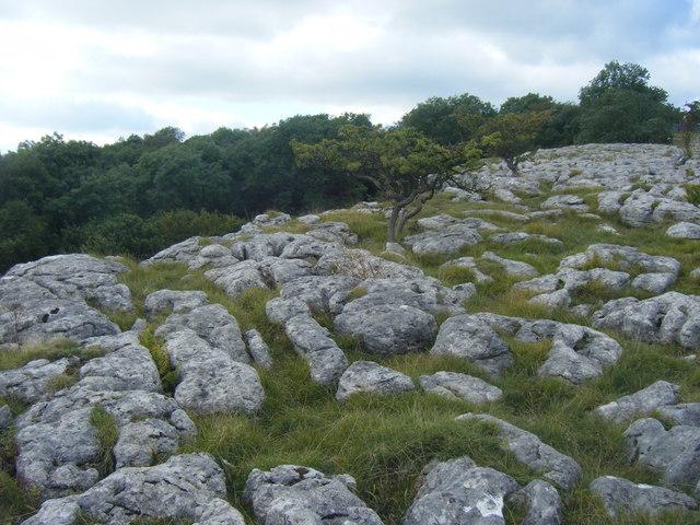 Limestone Pavement and Bastow Wood
