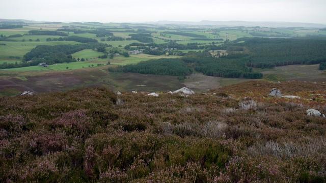 Harbottle Hills