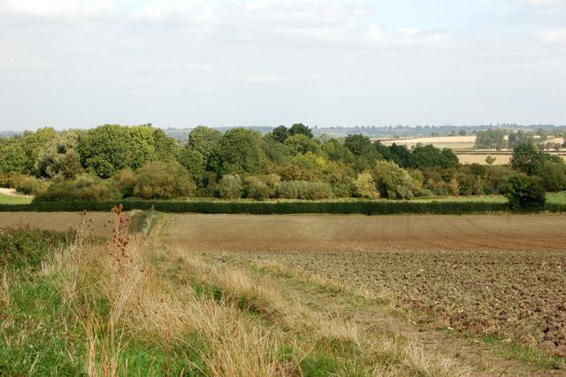 Track and bridleway north of Bascote Lodge (7)