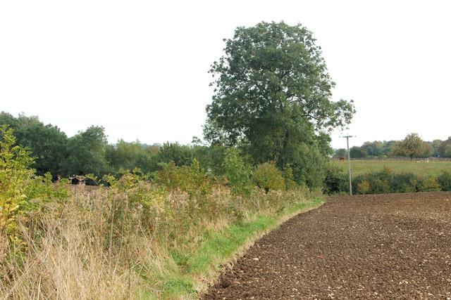 Track and bridleway north of Bascote Lodge (8)