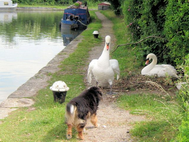 The towpath is closed to dogs