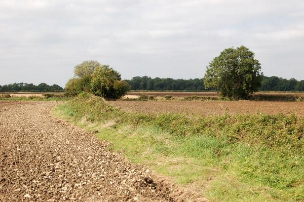 Farmland west of Snowford Hill Farm