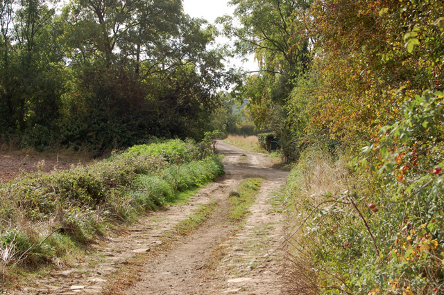 Track and bridleway north of Bascote Lodge (9)