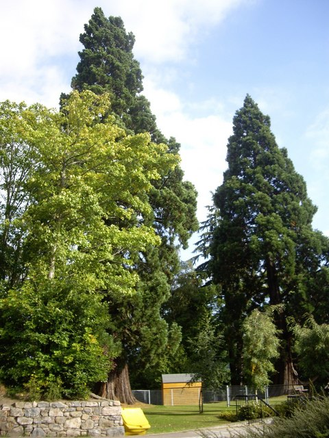 Exotic conifers by Banchory Academy