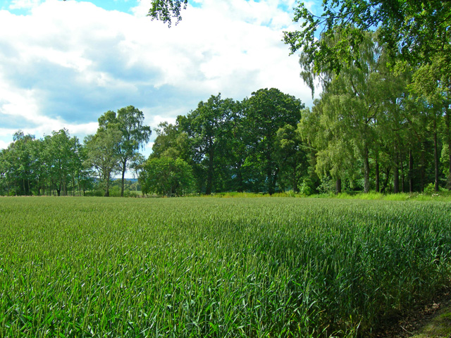 Grassy field sandwiched betwixt the River Don and Fetternear House