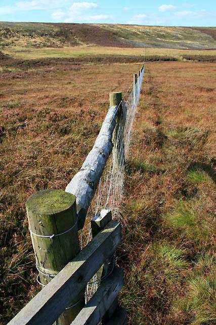 Fence Across the Moor