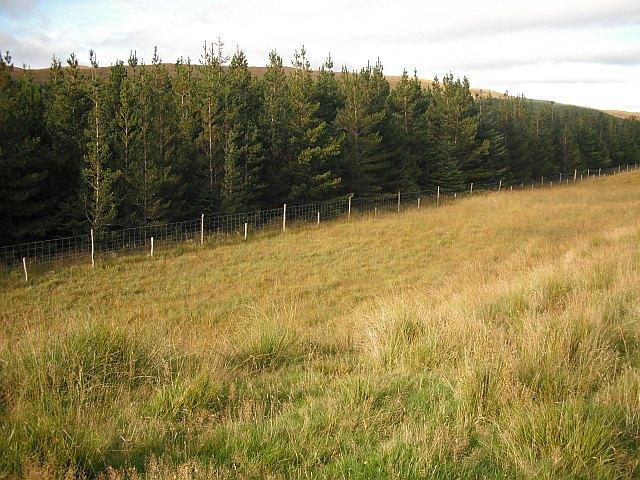 Small plantation, Achallader