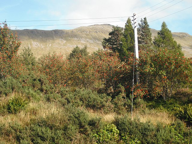 Rowan berries, Bridge of Orchy