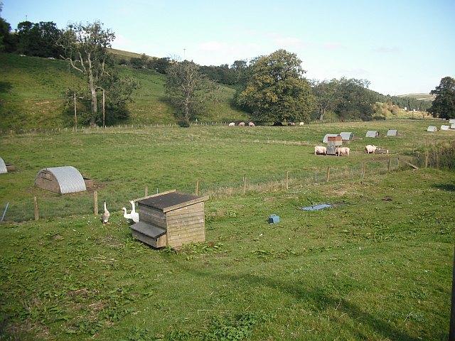 Livestock, Woodfoot Bridge