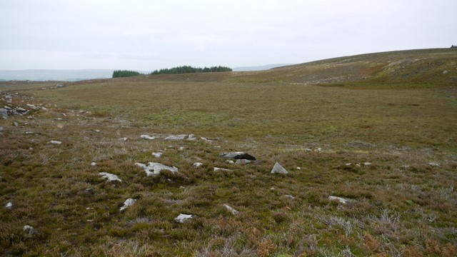 Moorland north of Cold Law