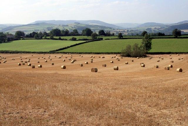 Field of bales near Stoke Wood