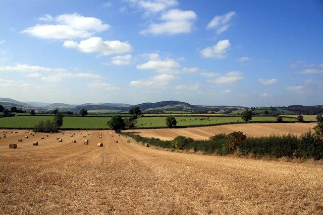 Shropshire Landscape near Stoke Wood