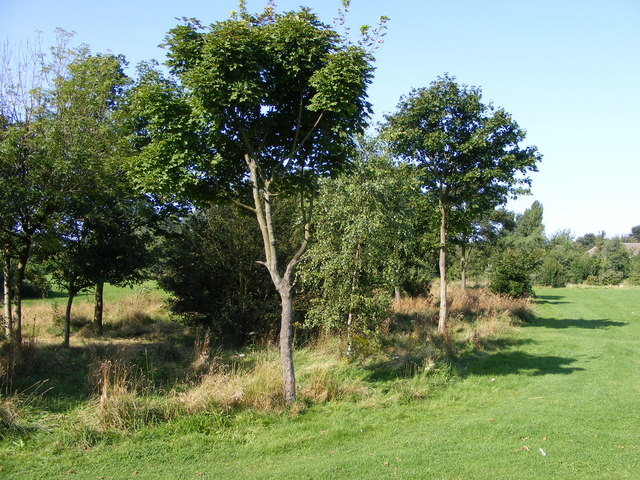 Proud's Lane Copse