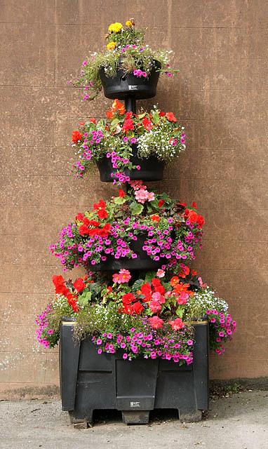 A floral display in Annan