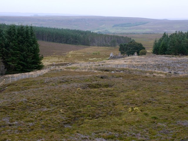 Moorland and forest south of Cold Law