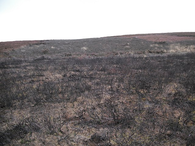 Burnt heather, Priest Law