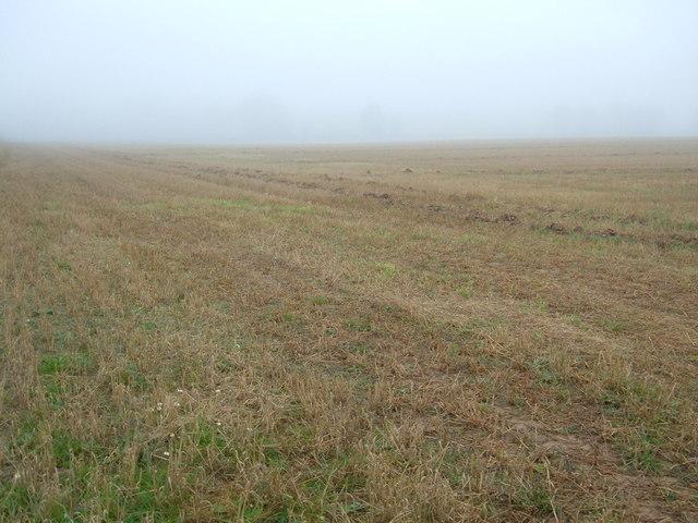 Wold's Field