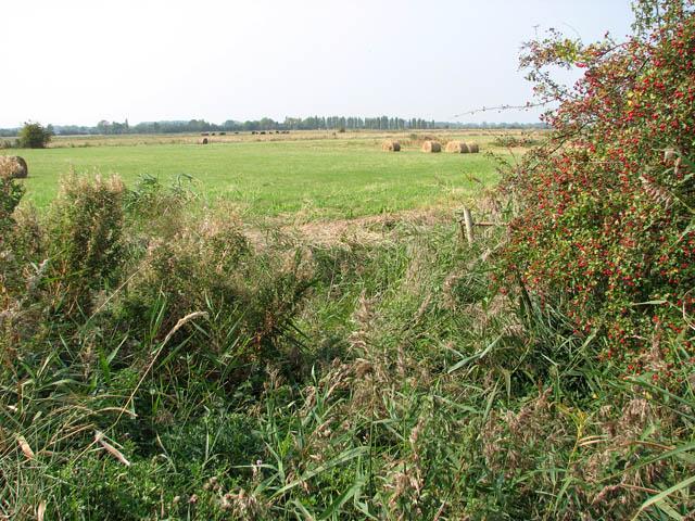 Straw bales in marsh pasture