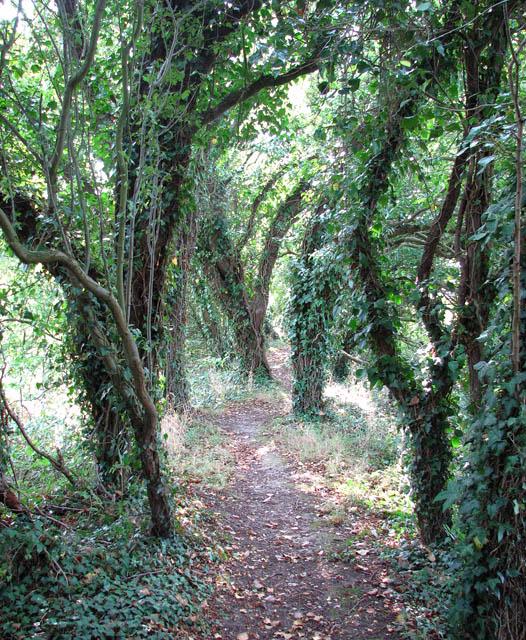 A shady path along Muck Fleet