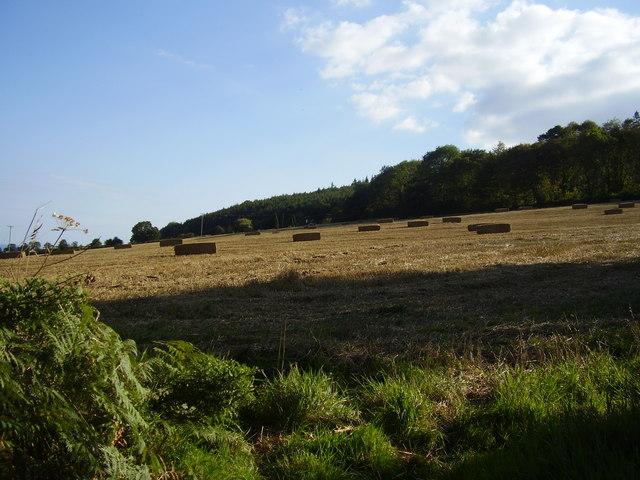 Bales at Bulverton.