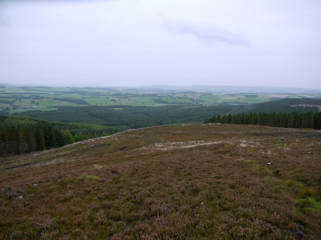 Heather moorland east of Cold Law