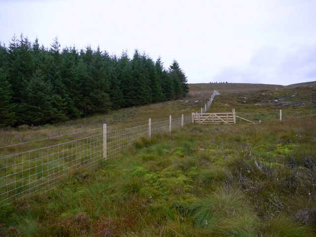 Forest - moorland boundary on west side of Harbottle Wood