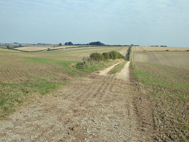 Winter Wheat near Barton Hill Farm