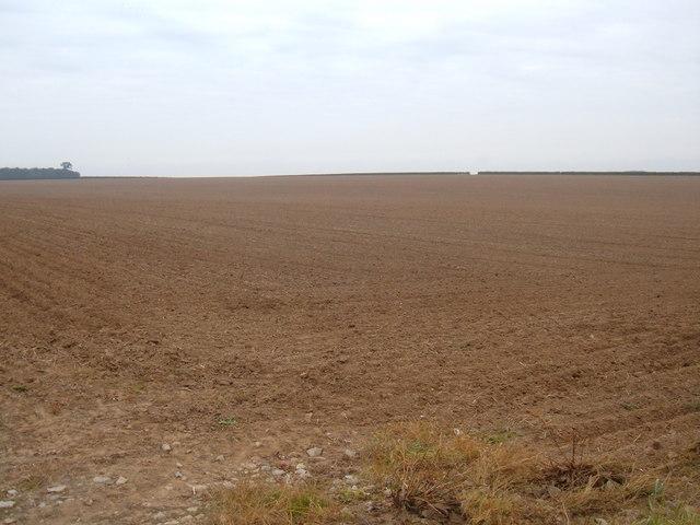 Wolds Field