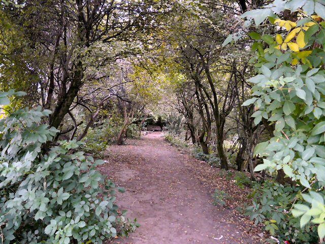 Footpath in Woods