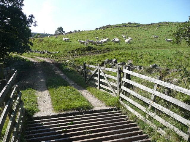 Cattle grid near Baledmund Farm