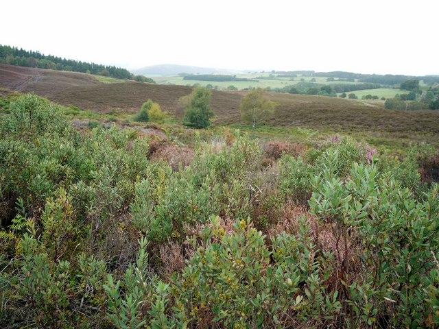 Bog myrtle scrub, Harbottle Moors