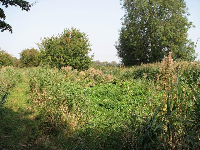 View across an overgrown Muck Fleet