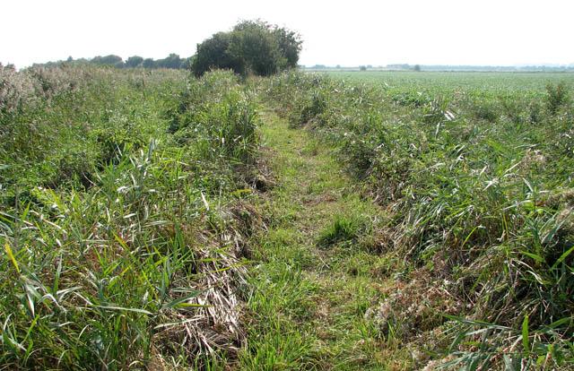 Path along Muck Fleet