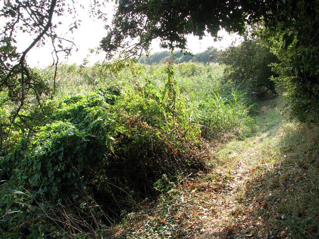 Path along the western bank of  Muck Fleet