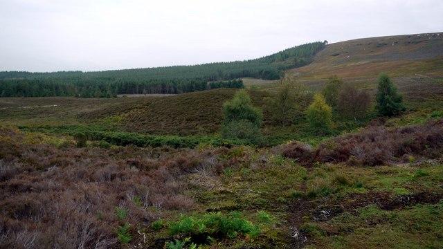 Boggy moorland below Harbottle Hills