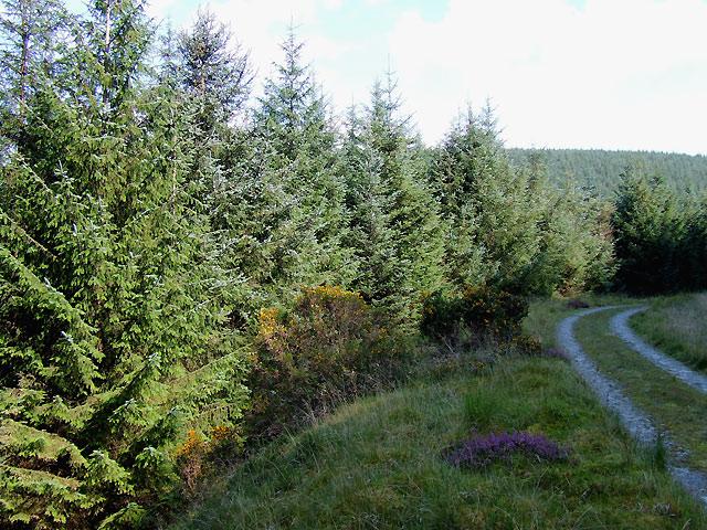 Lon Las Cymru in the Tywi Forest, Powys