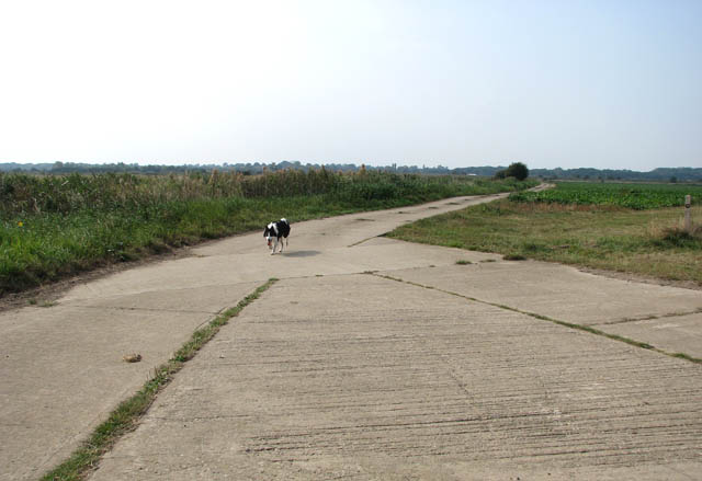 Concrete track leading to marsh pastures