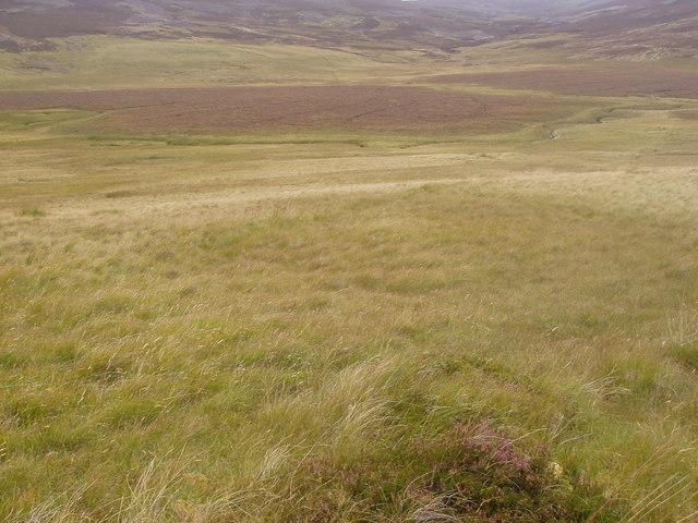 Large bog